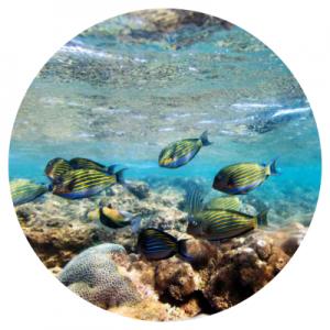 Snorkelen en duiken zijn leuke activiteiten op Sri Lanka