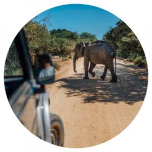 Een safari blijft één van de leukste activiteiten op Sri Lanka